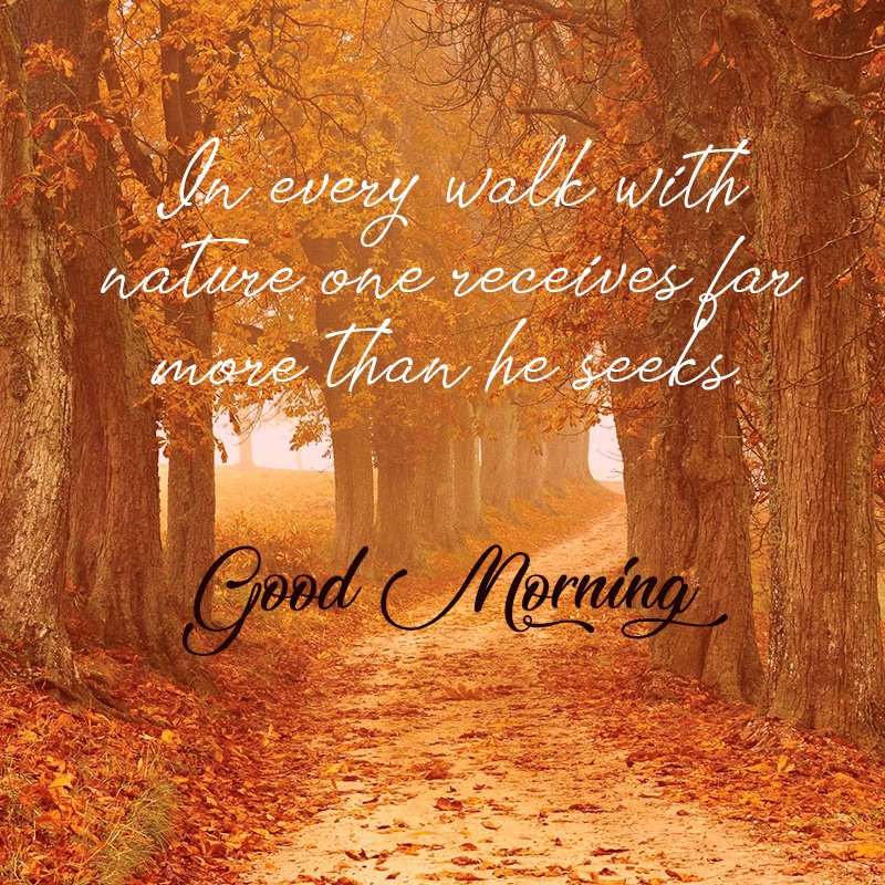 Nature good Morning wishes