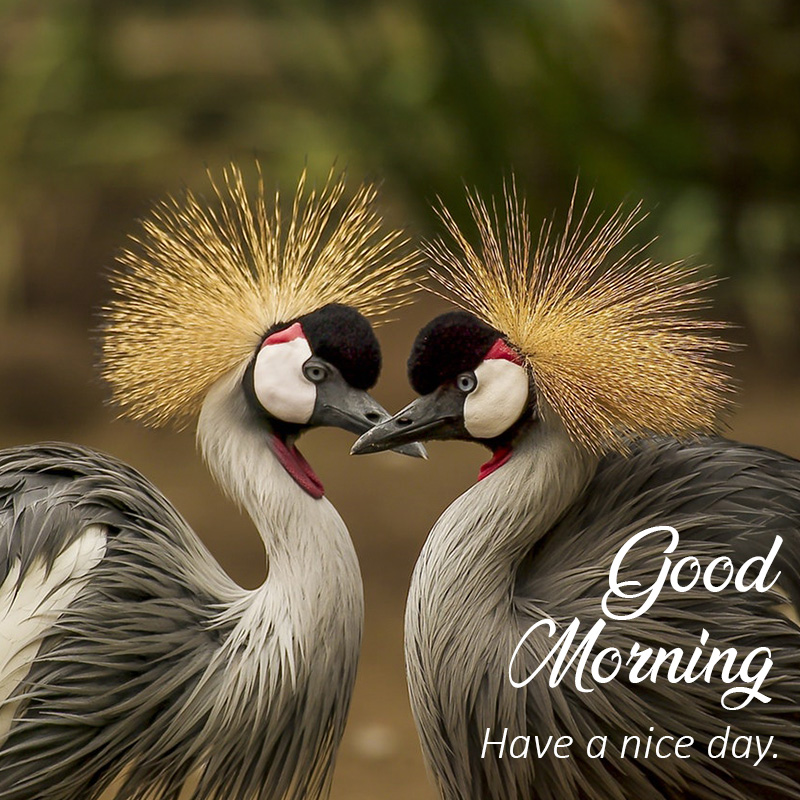 Good morning message with animal Birds making heart
