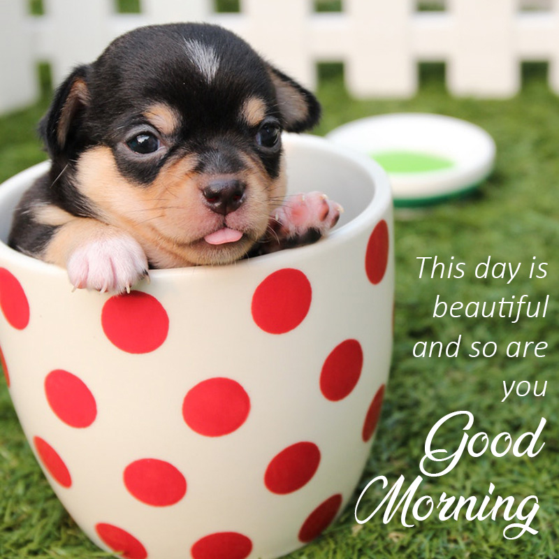 Good morning message with animal Puppy