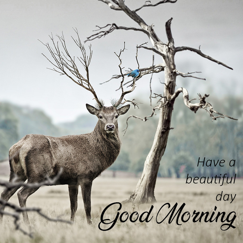 Good morning message with animal Deer
