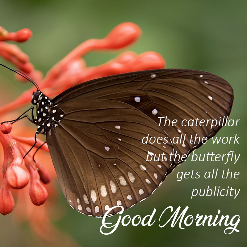 Good morning Image with Butterfly