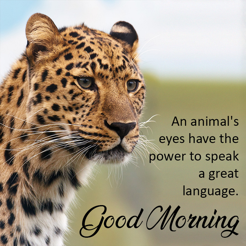 Good morning Image with Leopard