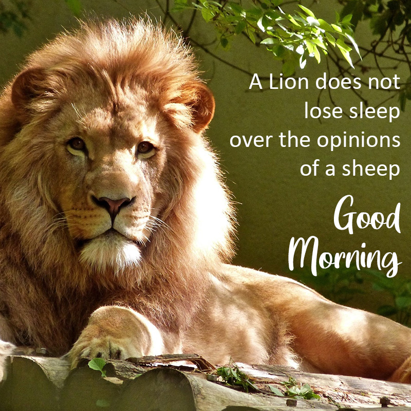Good morning Image with Lion