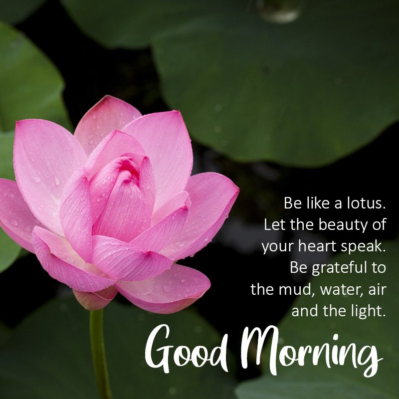 good-morning-wish-with-lotus-flower