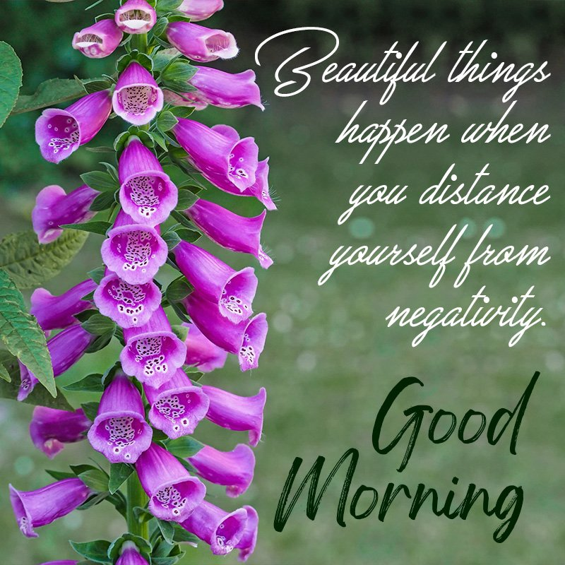 good-morning-wish-with-puple-bell-flower