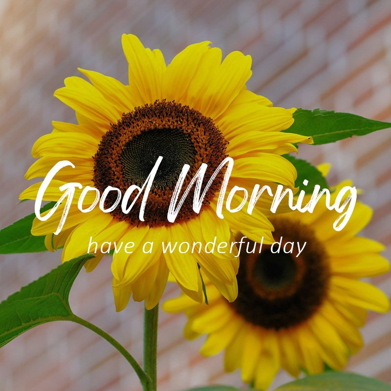 good-morning-wish-with-sun-flower