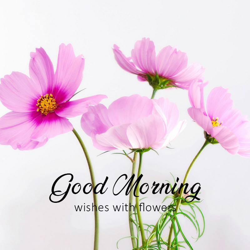 good-morning-wishes-with-flower