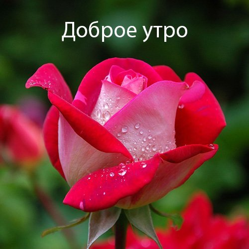 Good Morning Wish Image in Russian