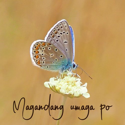 Good Morning Wish Image in Tagalog