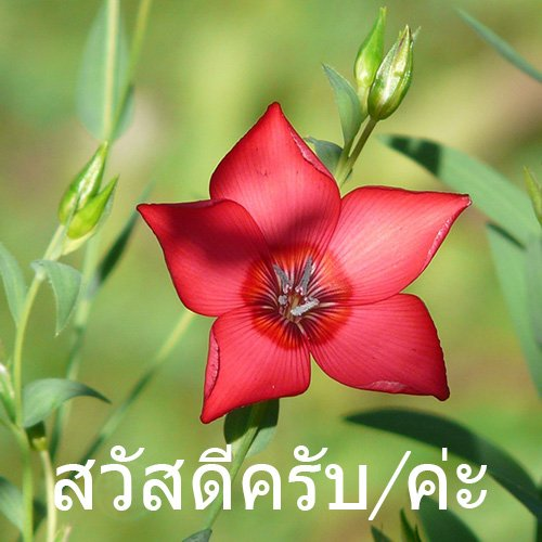 Good Morning Wish Image in Thai
