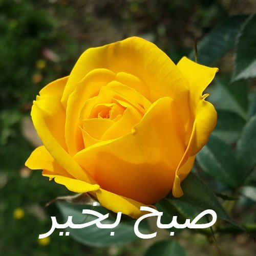 Good Morning Wish Image in different languages- Urdu